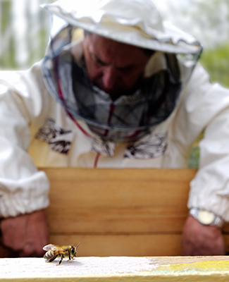 Beekeeping 101 - Working the Hive
