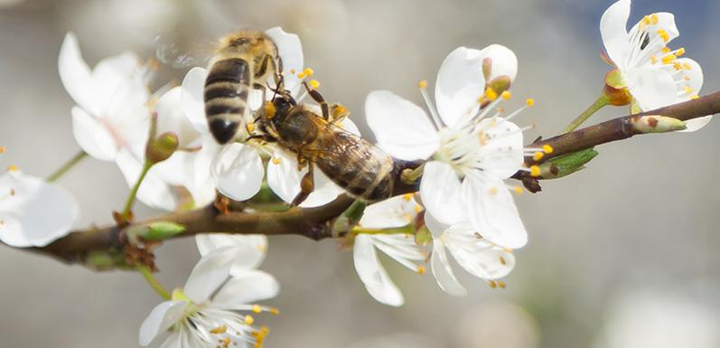 Take the Bee Informed Partnership's annual Colony Loss and Management Survey