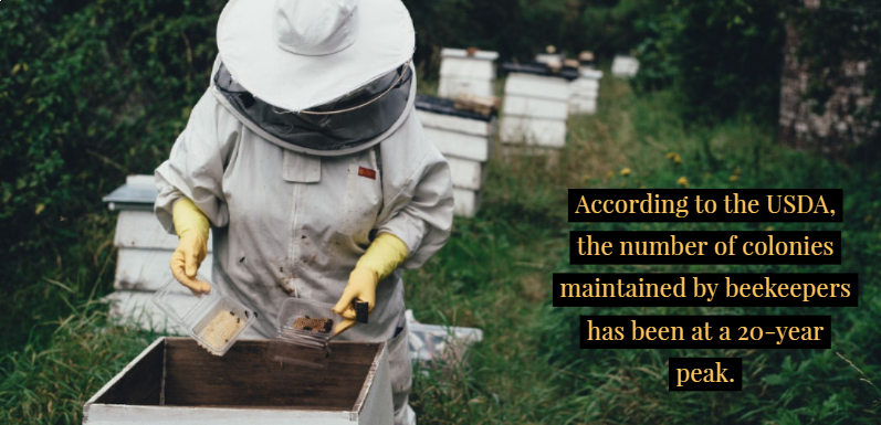 Beyond the Suit: A Wider Look at Beekeeping Equipment