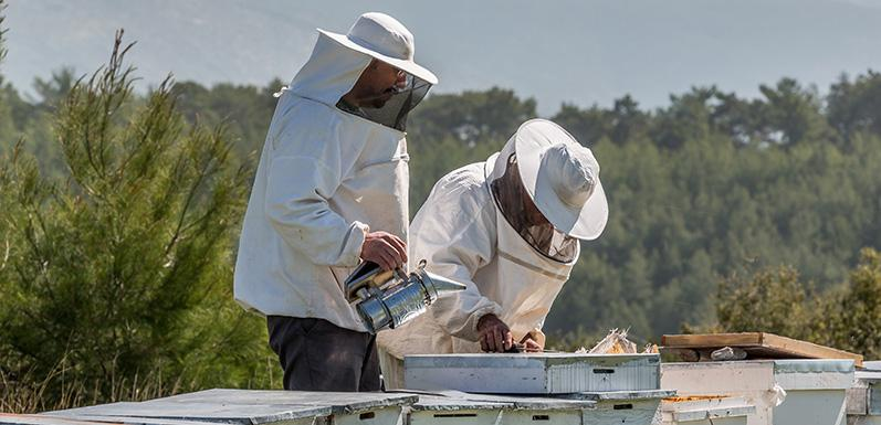 Understanding The Most Essential Beekeeping Tools: Part 2
