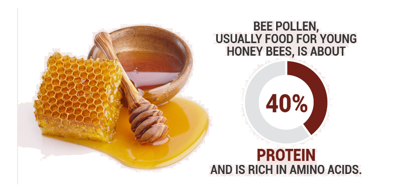Bee-ginner's Guide to Using Bee Pollen Safely and Effectively (Part 2)