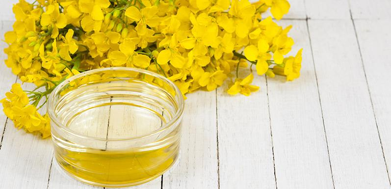 Understanding Conventional Canola Oil