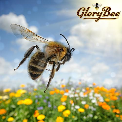 GloryBee Partners with PCC Natural Markets to Help Save the Bee