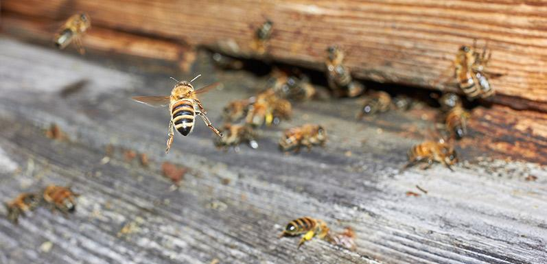 Oregon Beekeepers: Ask a Beekeeper