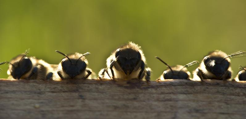 Getting Prepared for New Bees in 2016