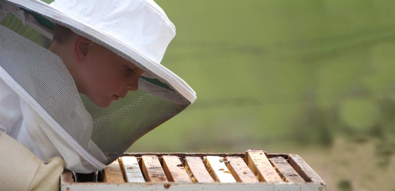 Top 5 Ways to Get Your Kids Excited About Beekeeping