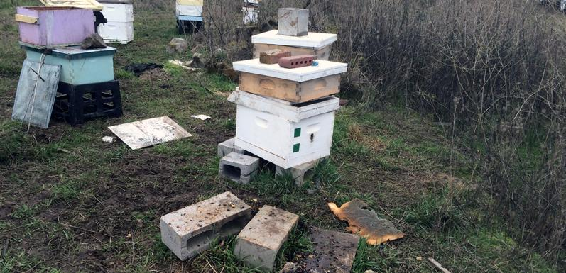 Beekeeping Lessons learned and Relearned