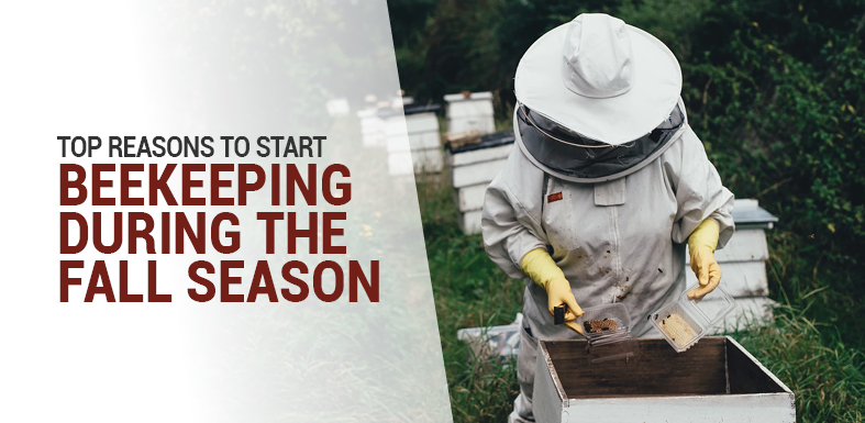 Top Reasons to Start Beekeeping During the Fall Season