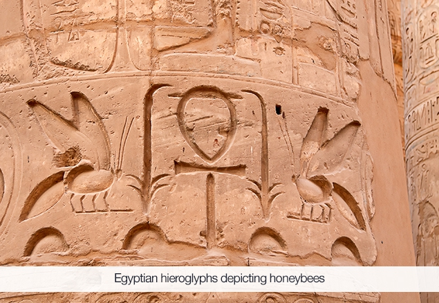 Egyptian hieroglyphs showing bees