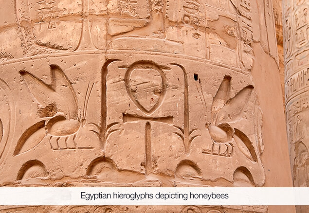 Egyptian Hieroglyph Depicting a Honeybee